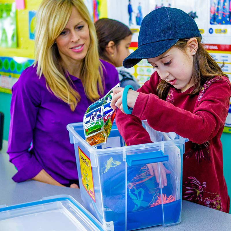 Classroom Break Box™ - Starter Kit